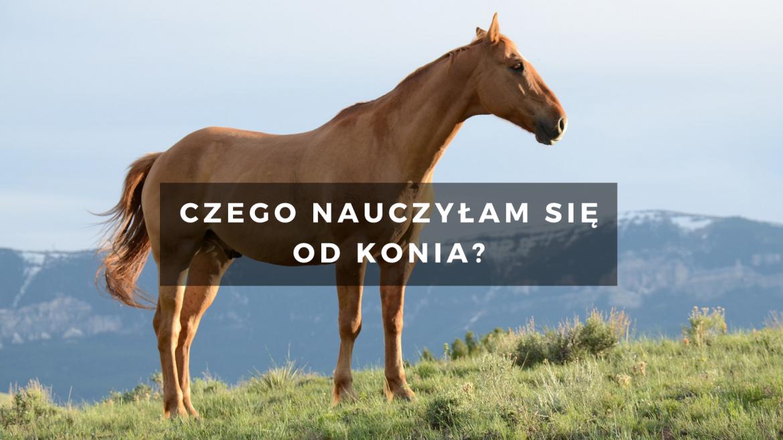 Czego nauczyłam się od konia?